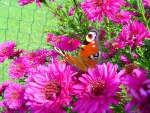 Barwne kwiaty na poprawę samopoczucia