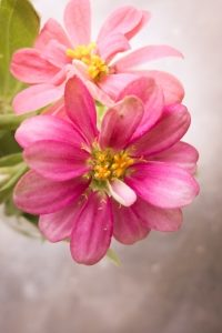 kwiat romantycznie